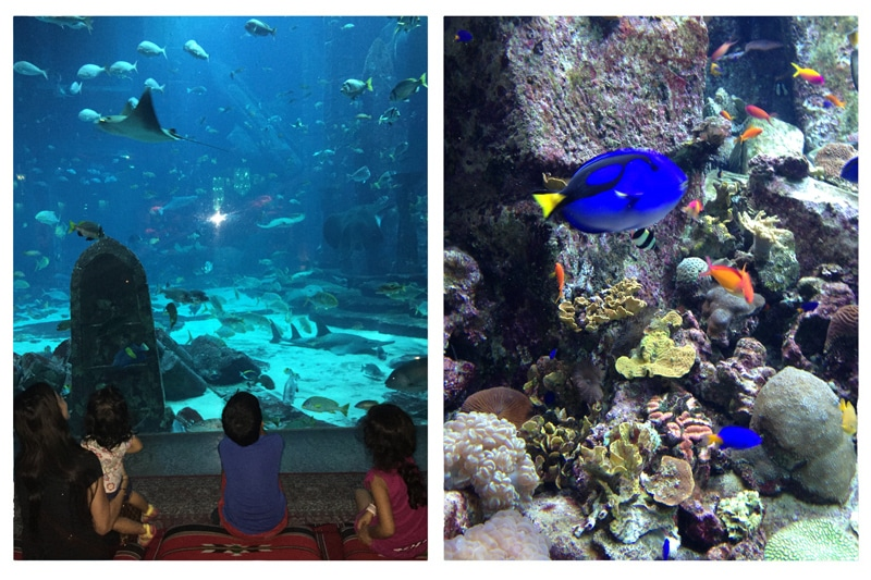 10 Things To Do With Kids In Dubai   Fun with Mama