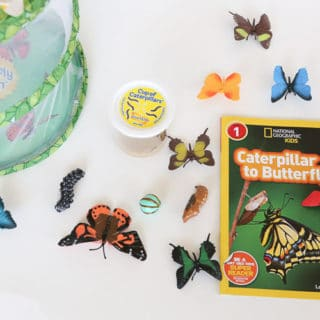 Caterpillar Butterfly Life Cycle Activity
