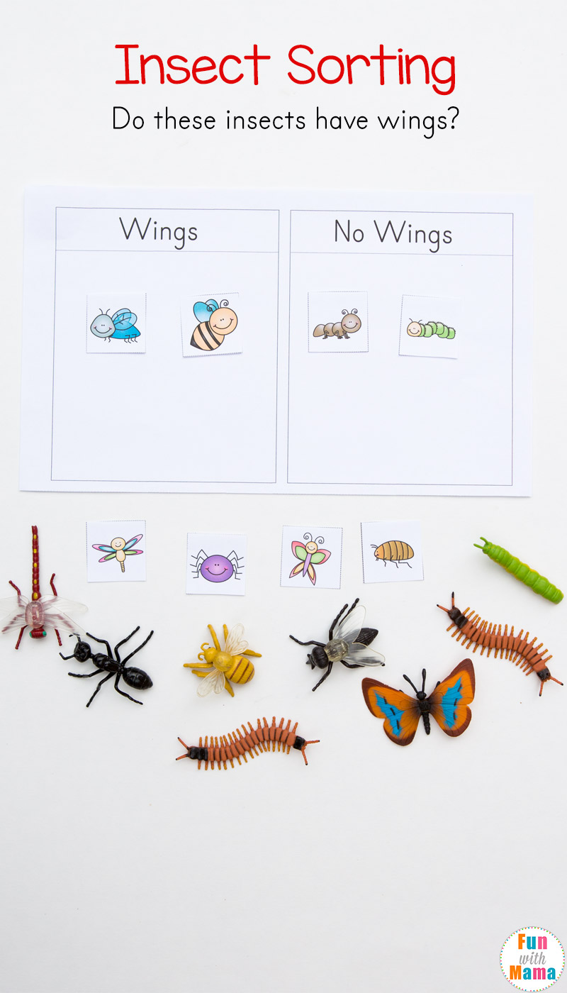 Preschool Insect Theme Sorting Worksheet + Bug Activities ...