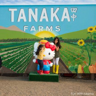 Tanaka Farms Pumpkin Patch With Hello Kitty Afternoon