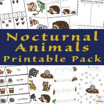 Nocturnal Animals For Kids