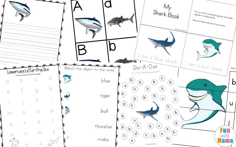 shark activities