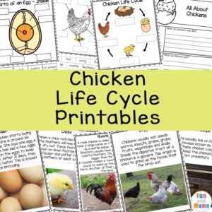 Chicken Life Cycle Printables a 300x300