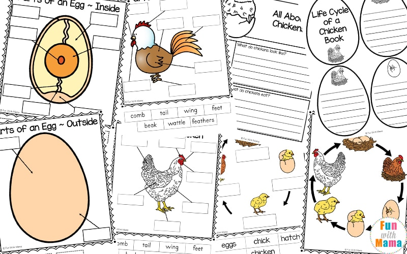 photograph regarding Life Cycle of a Chicken Printable known as Bird Existence Cycle - Enjoyable with Mama