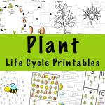 Plant Life Cycle Learning Pack