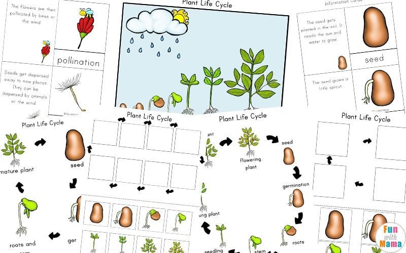 Plant Life Cycle Learning Pack - Fun with Mama