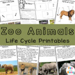 Zoo Animals Life Cycle Printables