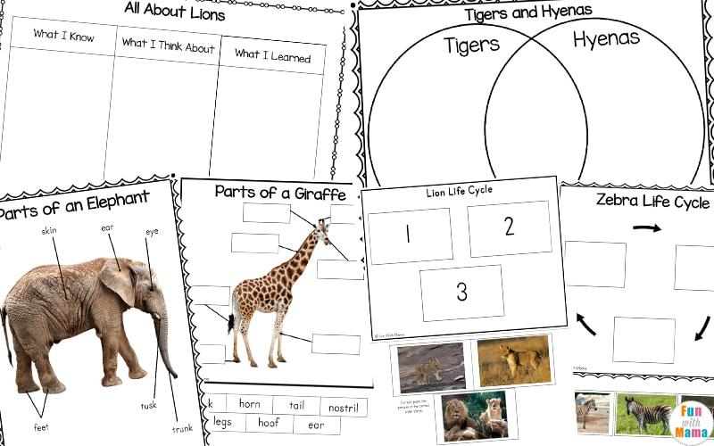 Zoo Animals Life Cycle Printables - Fun with Mama