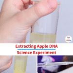 Fruit DNA Extraction Lab Science Experiment